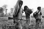 মুক্তিযোদ্ধার স্বীকৃতি পেলেন একাত্তর রণাঙ্গনের ১০ বীর নারী
